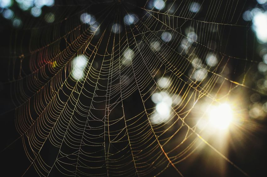 Web world The Week On EyeEm Nature Sunrise Morning Colour Gold Golden Color Morning Village Spider Sunlight Sunrise Spider Web Spider Web No People Close-up Outdoors Trapped Nature Day Fragility Animal Themes EyeEm Ready