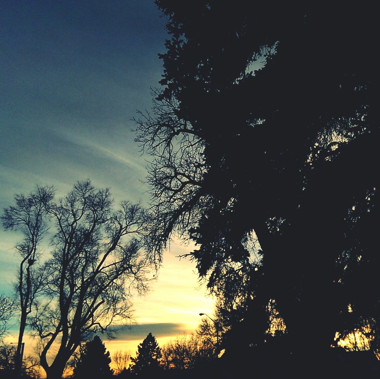 Trees Sunset Landscape Coloradogram