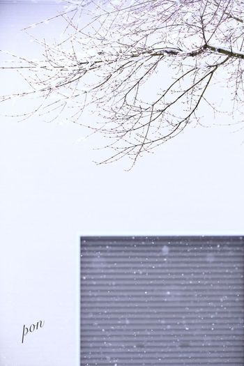 Spring Snow Snow Day