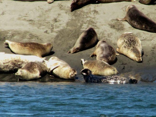 Sealion  Sealife Nature Beachphotography Soaking Up The Sun Ocean View Wildlife Oceanlife Family Time