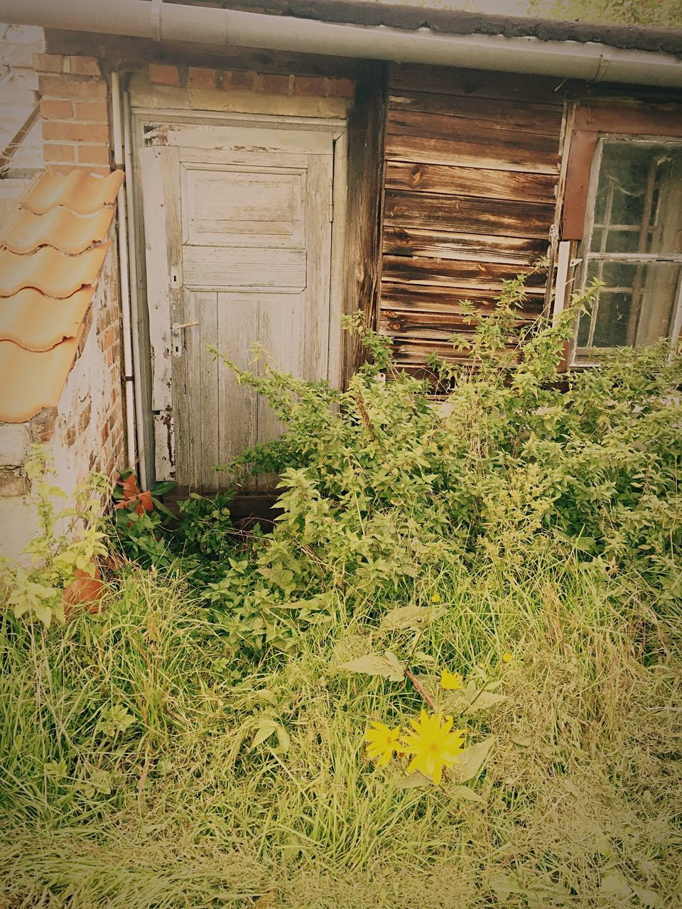 built structure, house, architecture, no people, day, plant, grass, growth, nature, outdoors, building exterior, flower