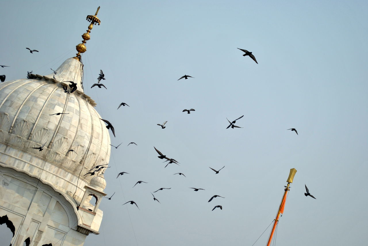 Flocks of birds flying across the dome of a Gurudwara in New Delhi. Animal Themes Architecture Bird Blue Sky Built Structure Day Dome Flock Of Birds Flying Gurudwara In Large Group Of Animals Marble Stone Monument New Delhi No People Outdoors Pigeon Religion Religious Architecture Sikh Sikh Temple Sky Spread Wings Statue Adapted To The City