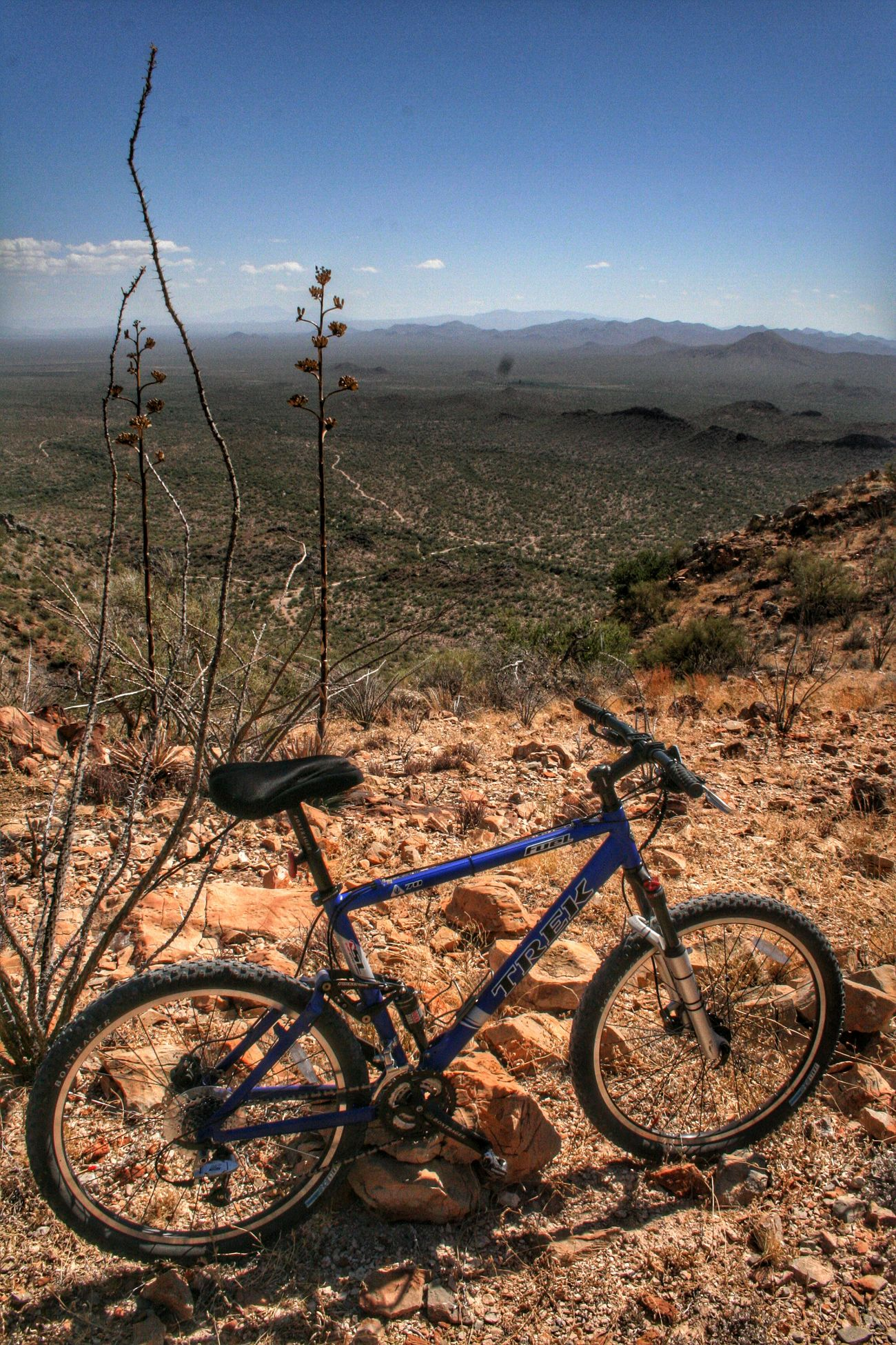 Mountain Biking Mountainbiking Waterman Peak, AZ Landscape Arizona Desert MTB Fouquieria Splendens