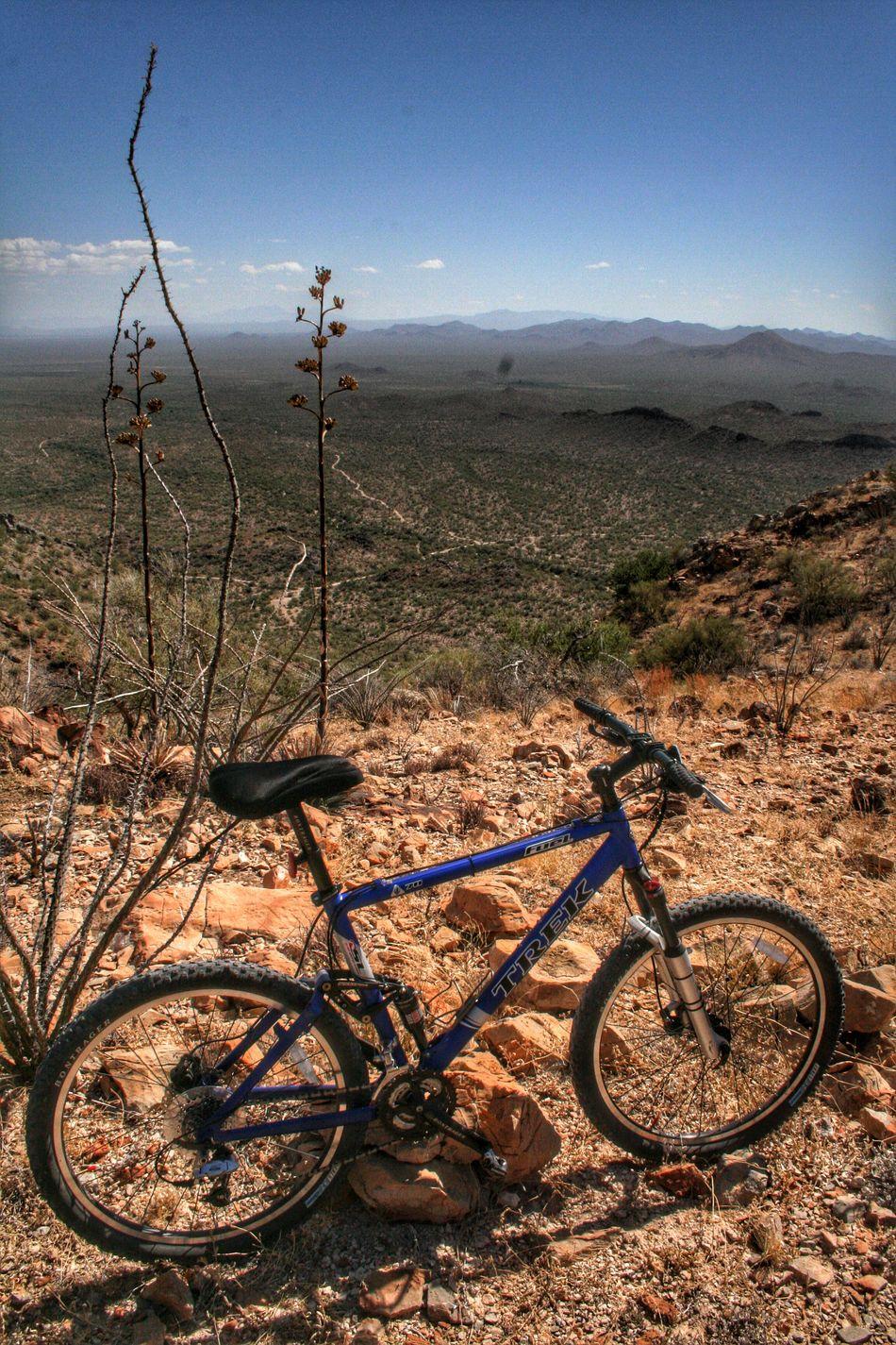Mountain Biking Mountainbiking Waterman Peak, AZ Landscape Arizona Desert MTB Fouquieria Splendens