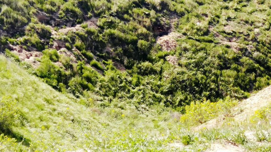 Thebluffs BakersfieldCA Kerncounty View From Above Valley Below Greenery Greenery Scenery Nature Nature_collection Nature Photography Naturelovers Nature Is Art Somuchgreen🌱 Springtime Spring Has Arrived Spring2016 Beautiful Day Beautiful View