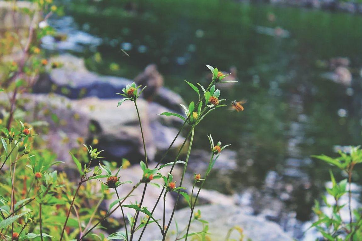 Plant Bee 🐝 Cute♡ Canon EOS Rebel T3