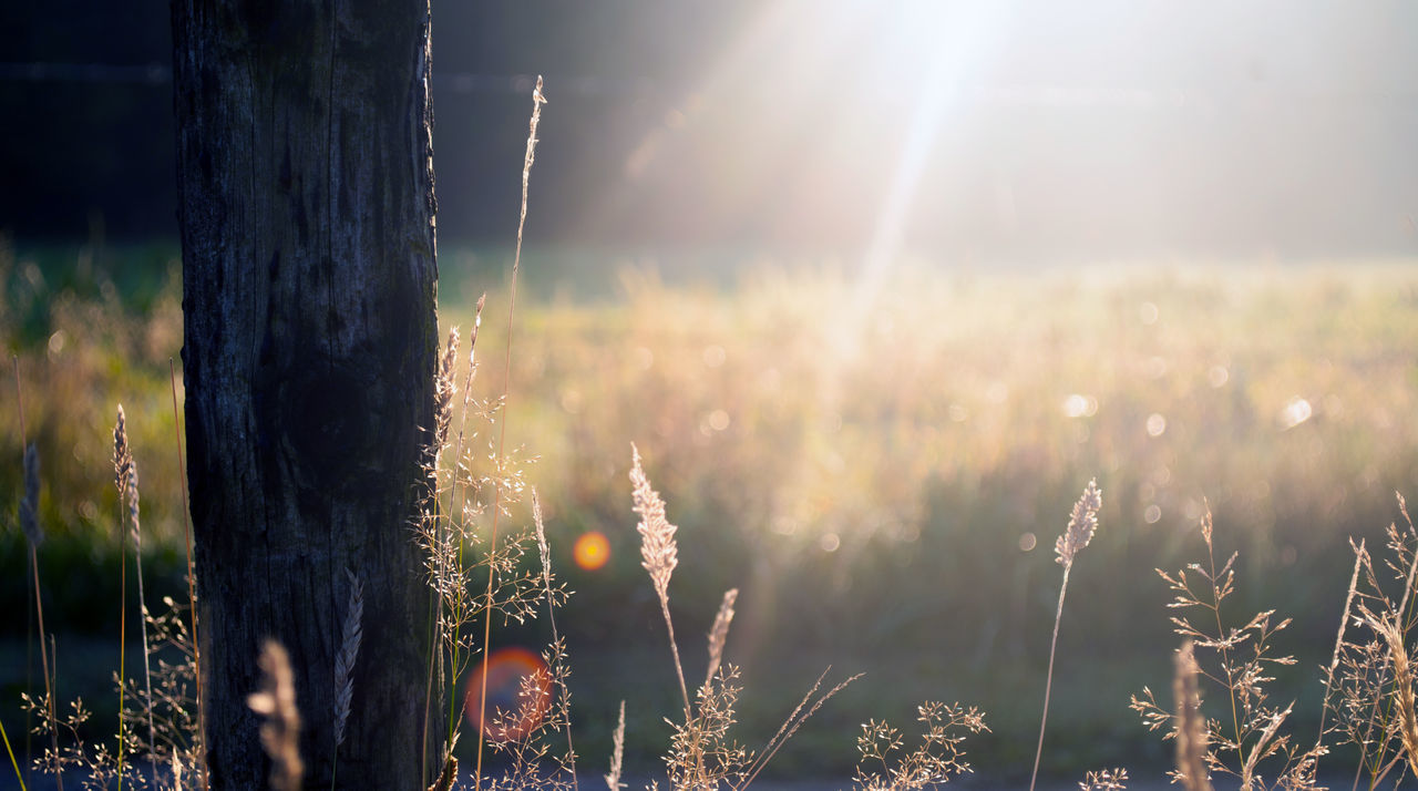 Camping. Beauty In Nature Chill Close-up Day Field Focus On Foreground Grass Growth Landscape Lens Flare Live For The Story Nature Nature Nature Photography Nature_collection No People Outdoors Plant Summer Sun Sunlight Sunset Tranquility