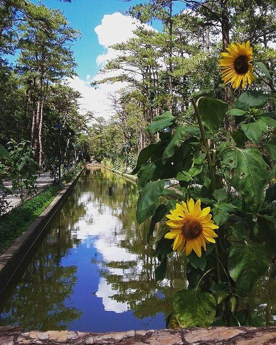 Loving the calm and serene ambiance. Baguio Baguiocity Wrightpark Piñas  WhenInBaguio Instalike Instadaily Instapic Sunflowers Greenery Park Followstagram Tweegram Igers Igersmanila Ignation Turista Byahenitin2016