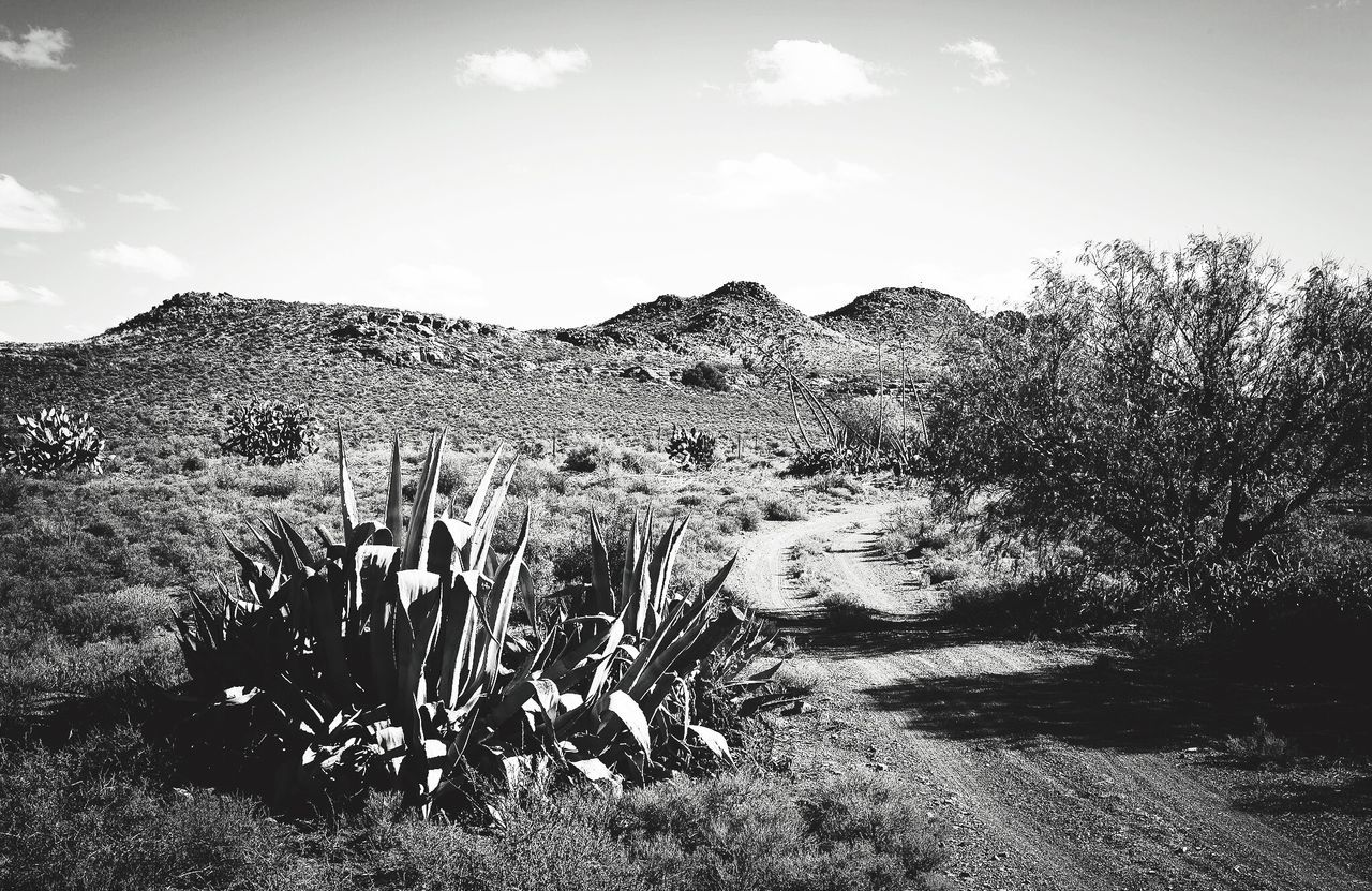 Karoo Farm Farm Landscape Cactus Arid Climate Agave Hill Physical Geography Mountain Geology Remote Nature Wilderness Area Outdoors Dirt Karoo Karoospaces Karooheartland