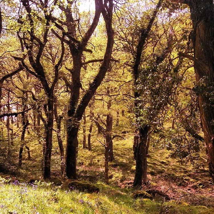 WoodLand Walk Countryside Fatherford okehampton devon devonlife lucky