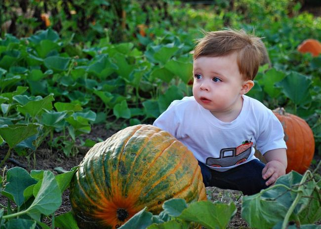 My grand lil pumpkin Pumpkin Child Childhood Males  Plant Leaf Vegetable Boys One Person Outdoors Front View Growth People Agriculture Food Nature Day Portrait My Grandson Family My Joy  Pumpkinpatch