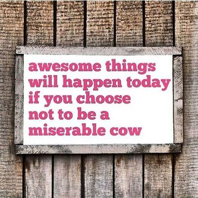 """Challenge accepted """"awesome things will happen today if you choose not to be a miserable cow"""" - Bring it on 30th Year...I got you on lock."""