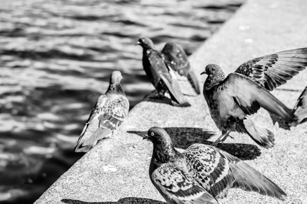 Side View Of Birds Against Blurred Rippled Water
