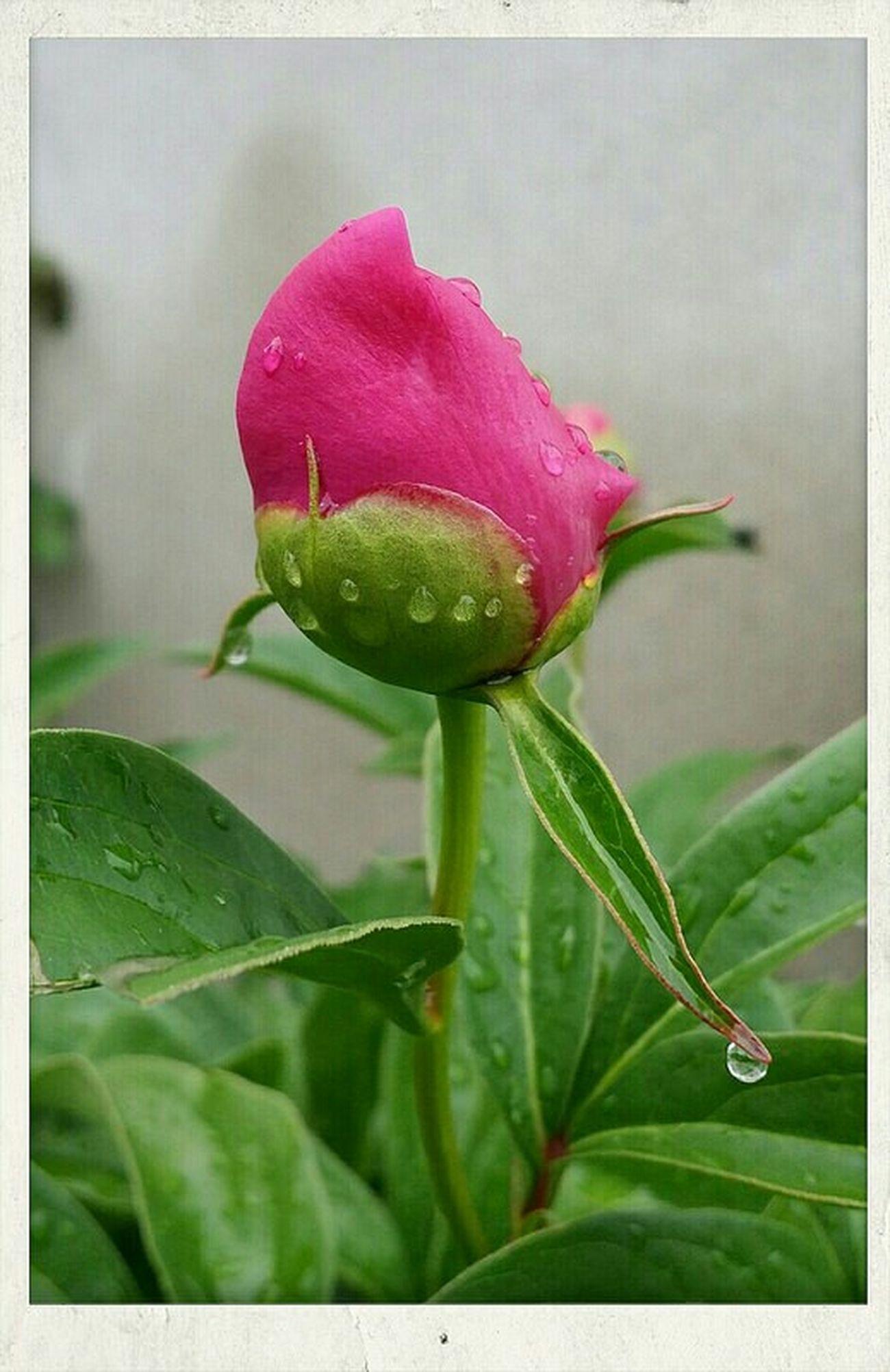 Photo Des Fleurs Nature Pink