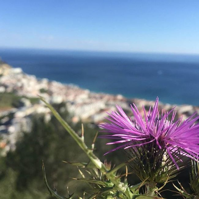 Momentos focados 🌸📷 Flowerpower Pointofview View Preetyview Villagelife Awesome_shots Igersoftheday Faded Vscocam Vscophoto Snapseed Snapseeddaily Nature Naturelovers Dreamland Marchphotoaday Picoftheday Sesimbra Portugaldenorteasul Portugalcomefeitos Portugal