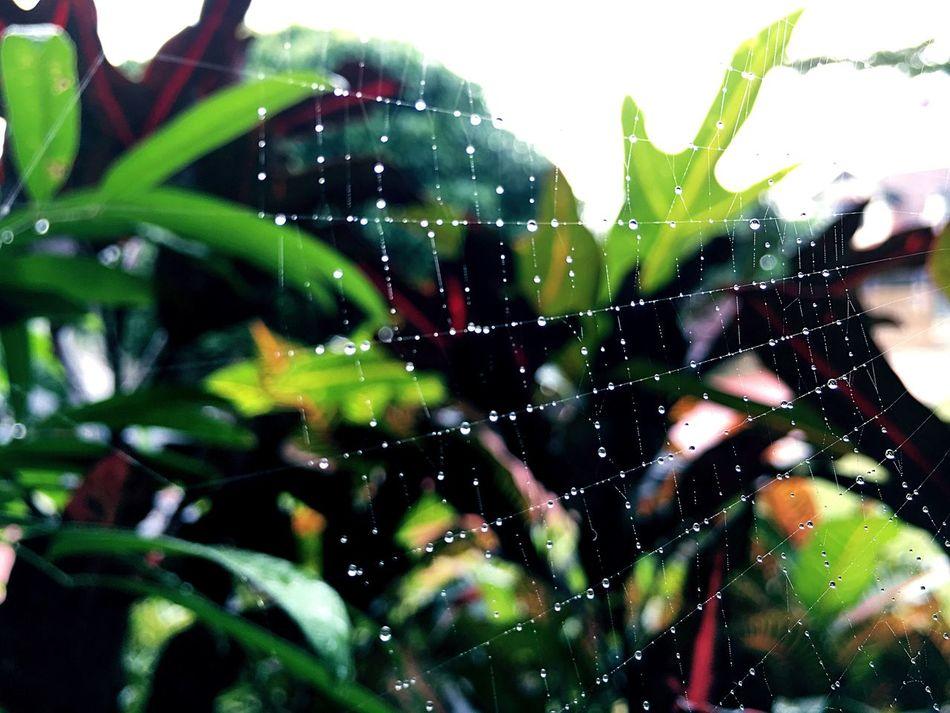 Spiderweb Cobweb Web Rain Mist Drizzle Rain Droplets Drizzling