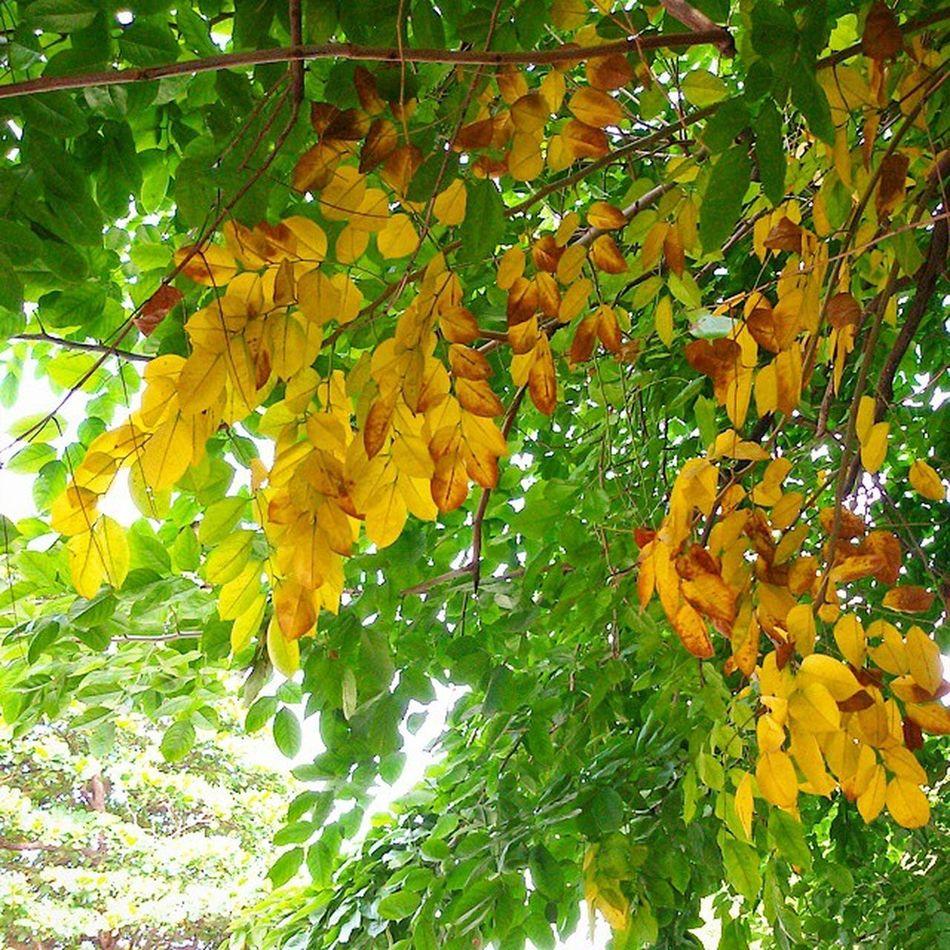 Autumn Mandalay Myanmar Burma Ingersmyanmar Vscomyanmar