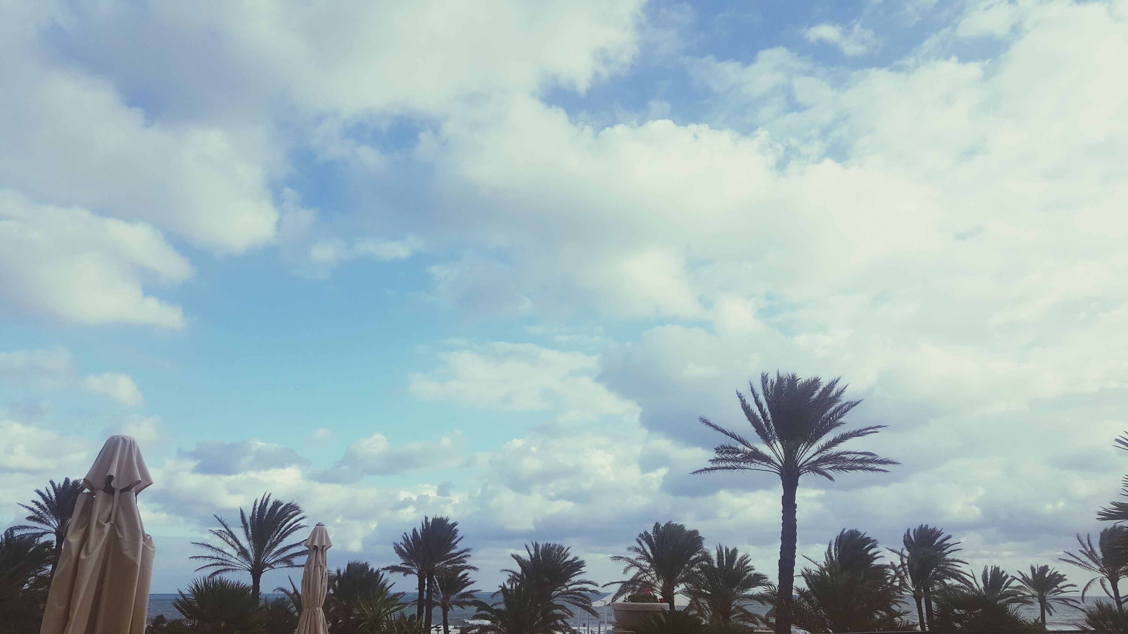tree, sky, cloud - sky, palm tree, growth, low angle view, nature, beauty in nature, outdoors, no people, treetop, scenics, tranquility, day