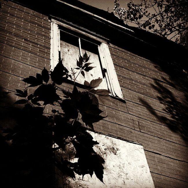 Abandoned Asylumwindow Windowporn Urbex Creepycrawly Barrenplace Neglected Architecture WillardInsaneAsylum