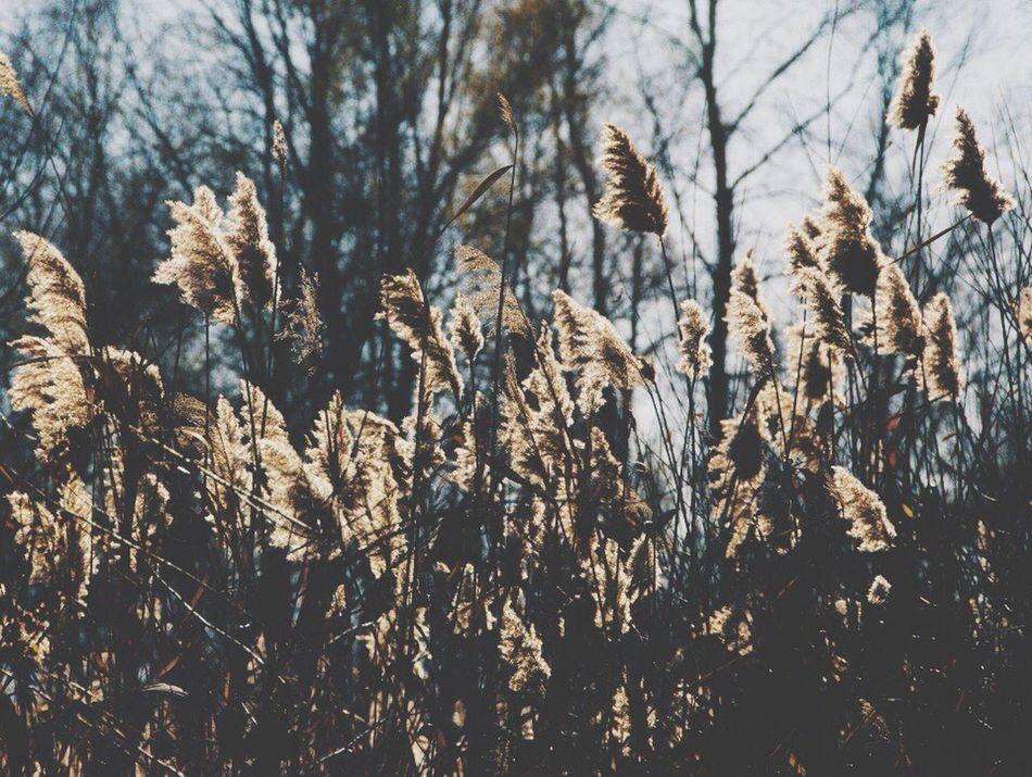 Найди своё счастье в луче солнца, в запахе ветра, в шуме реки. Присмотрись, прислушайся. Почувствуй этот мир. рожь природа степь счастье First Eyeem Photo