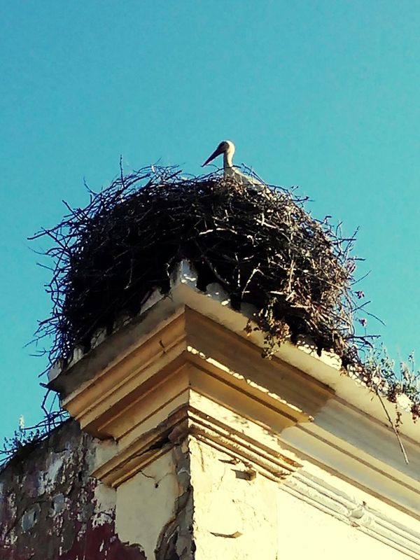 Stork Architecture Bird No People Outdoors White Stork Clear Sky Roof Day Weather Vane Building Exterior Built Structure Animals In The Wild Animal Wildlife Cockerel Low Angle View Animal Themes Sky Perching Nature