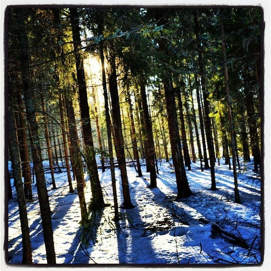 Hjortnäs Stillhet Vinter Instadalarna Leksand Dalarna
