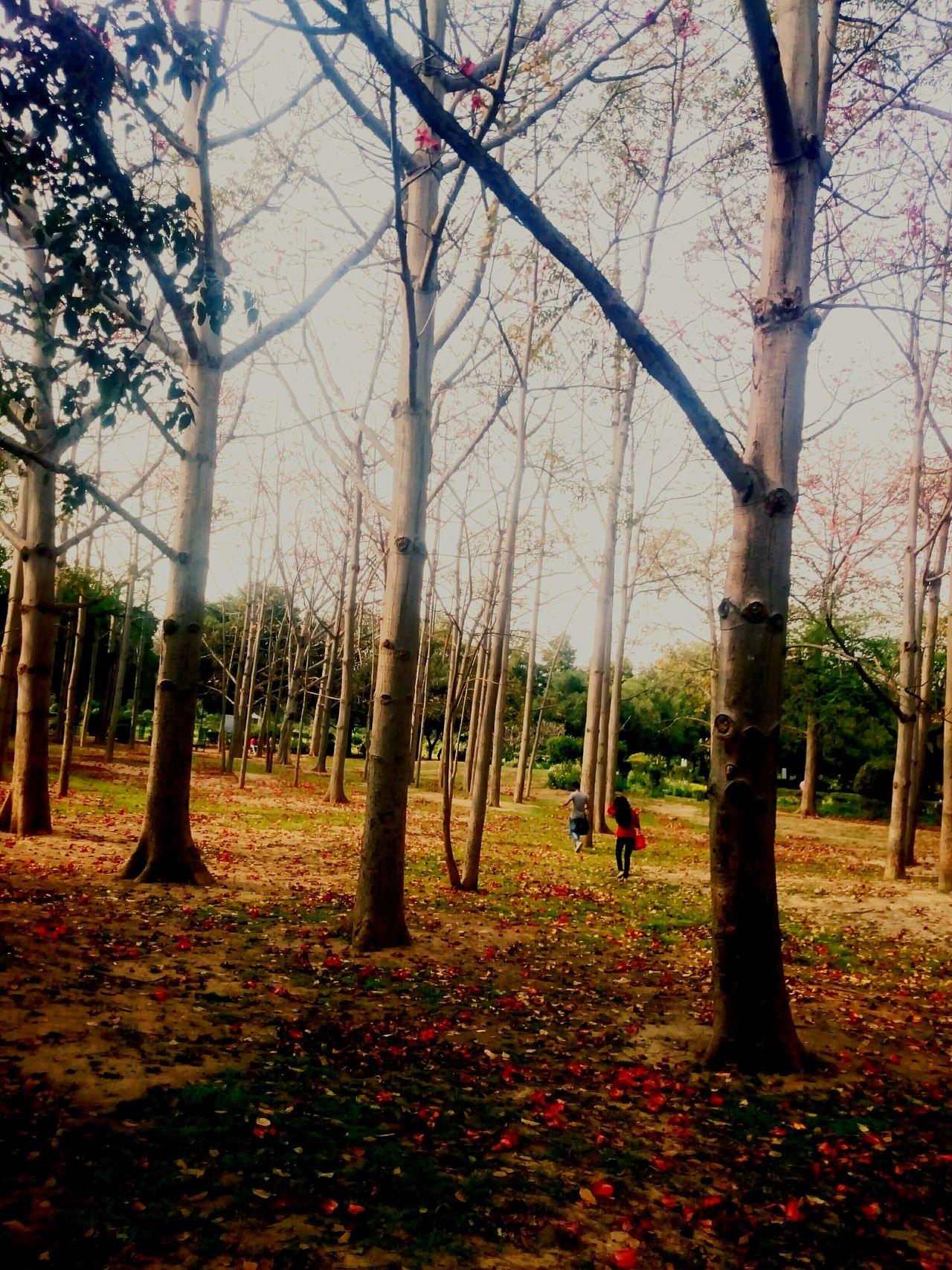 The small woods of hauzkhas! Hauzkhas Hauzkhasvillage DelhiGram Woods Nature Peace Romantic Mustvisit