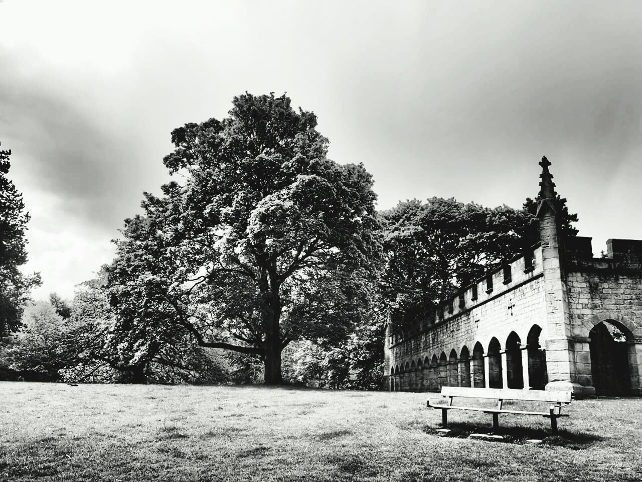 The Deer house Auckland castle Bishop Of Durham County Durham Trees TreePorn Auckland Castle B&w Photography North East The Deer House The Great Outdoors - 2015 EyeEm Awards