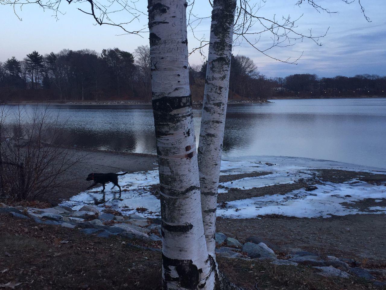 Birch trees series Winter Solstice Landscape Nofilter