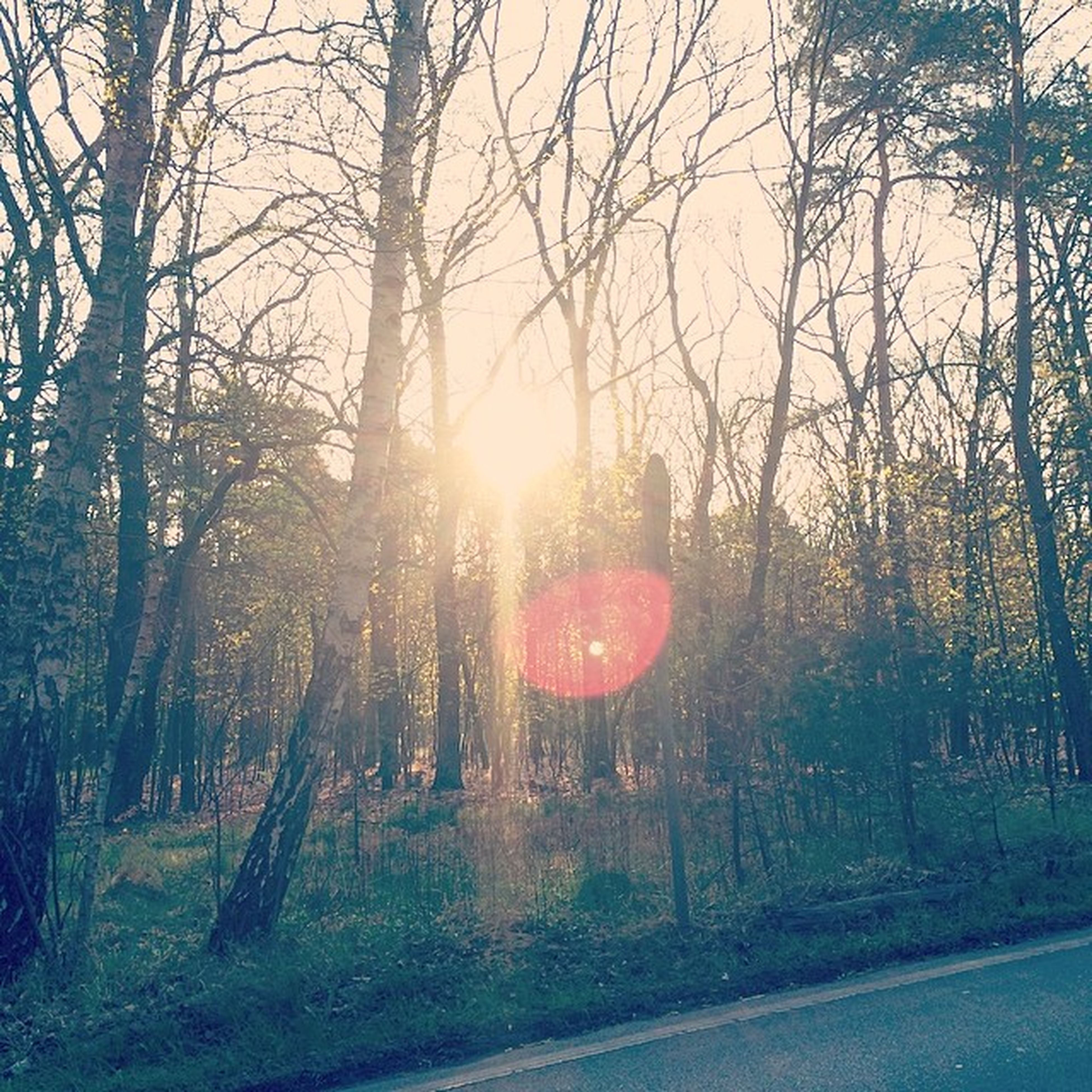 tree, sun, sunbeam, lens flare, sunlight, tranquility, tranquil scene, nature, tree trunk, landscape, bare tree, scenics, beauty in nature, field, branch, growth, grass, sunset, sky, forest