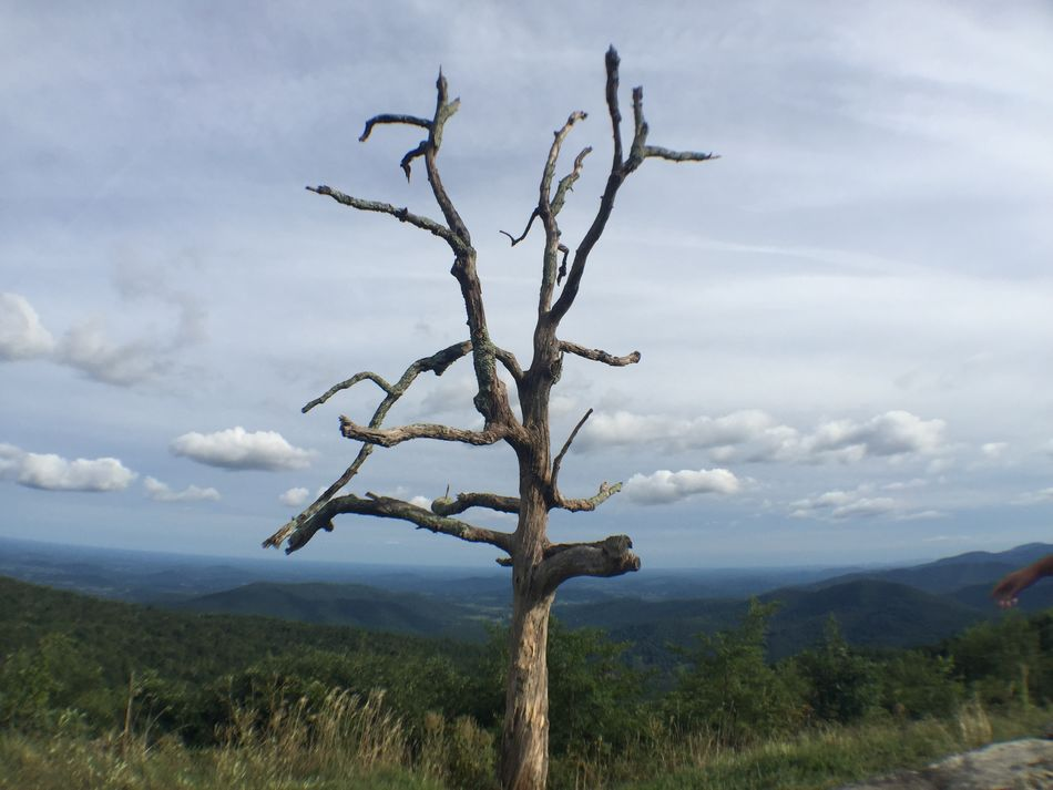 Trees on a mountain top in shenandoah national park Background Bare Tree Beauty In Nature Branch Countryside Dead Plant Dead Roses Growth Landscape Mountain Nature Non-urban Scene Remote S Scenics Shenandoah National Park Single Tree Sky Tourism Tranquil Scene Tranquility Travel Destinations Tree Tree Trunk Vacations