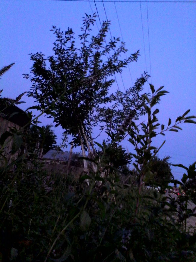 Unedited Photo Tree Blue Sky Clear Sky Outdoors No People Nature Plant Eyeemphoto @wolfzuachis Edited By @wolfzuachis Ionitaveronica Wolfzuachis Eyeem Market Trees Showcase: 2016 Unedited Streetphotography Plants 2016 Street Nature Plant Clear Sky