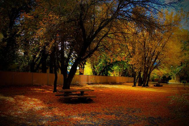 Diamond Mafia Photography Mount Shasta, California Landscape Northern California Vibrant Colors Fall Colors Autumn 2016 Autumn Collection Fallcolors Fall Leaves