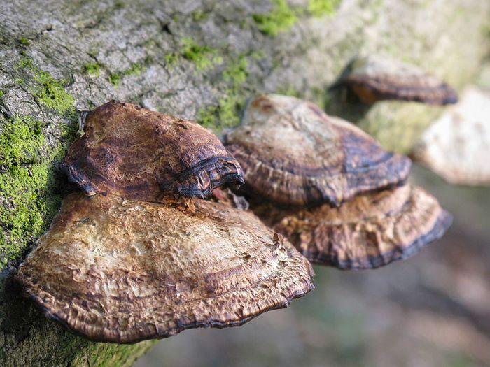 Mushrooms Toadstools Tree Trunk WoodLand Fungi Textured  Nature Landscape Scenics Rough Tree Area Tranquil Scene Textured  Forest