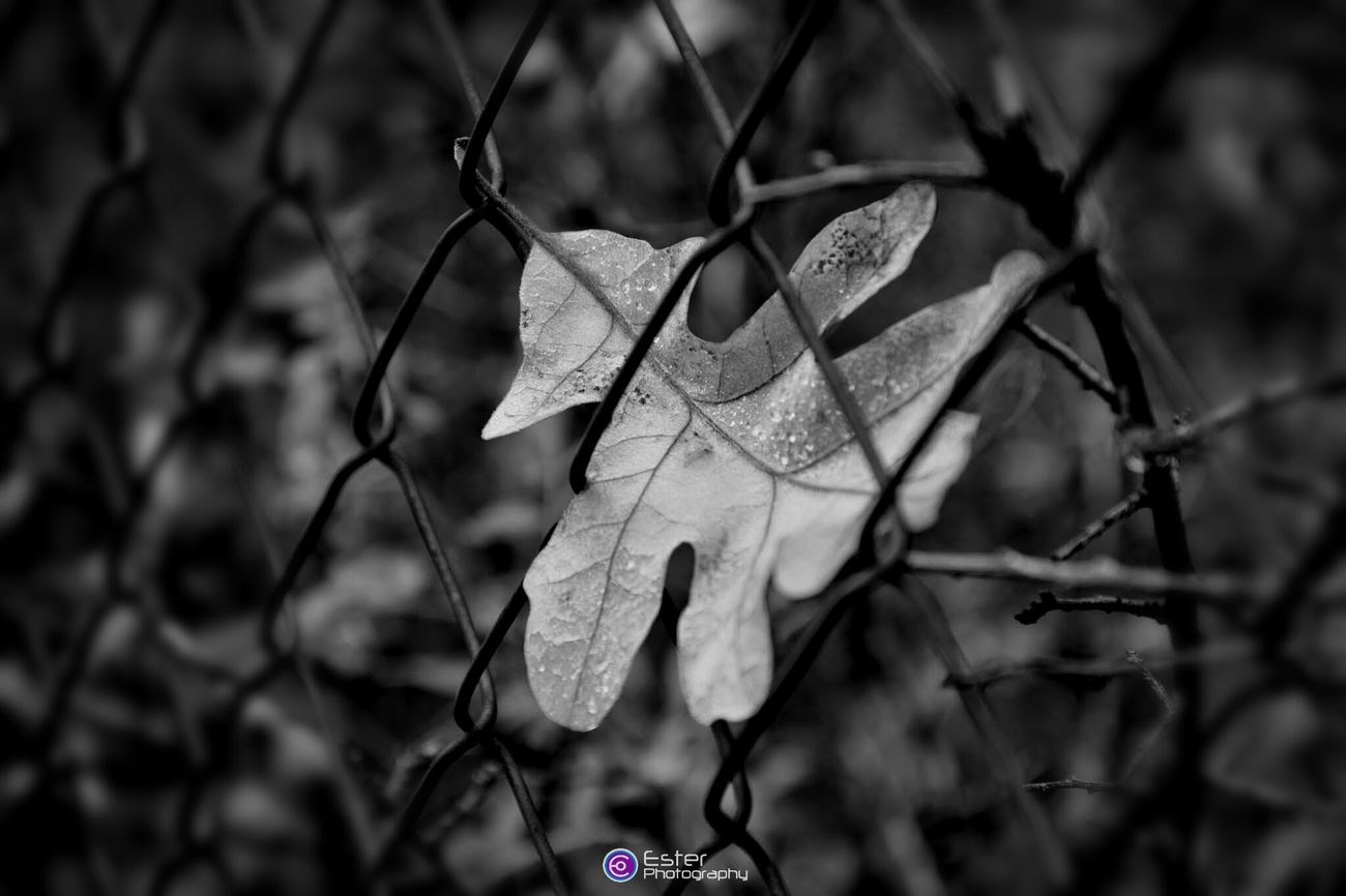 Trapped. Black And White EyeEm Nature Lover Autumn Leaves Eye For Details