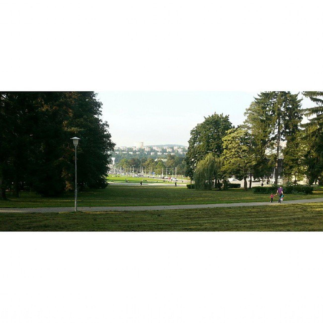 Zlin Park Tree Jiznisvahy Zlín centrum city ♥