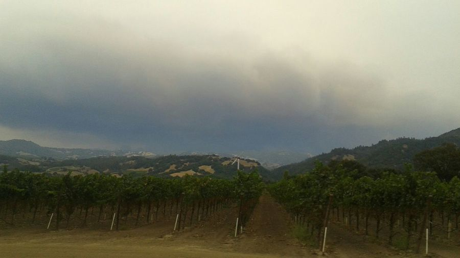 Alexander Valley looking east to Lake County four hours after the Valley Fire started. Valley Fire Fire Smoke Wildfire Forest Fire Smoke Forest Fire Alexander Valley Vineyard Lake County, Ca Lake County Smokey Sky Sonoma County Sonoma Wine Country Scenics Sky Nature
