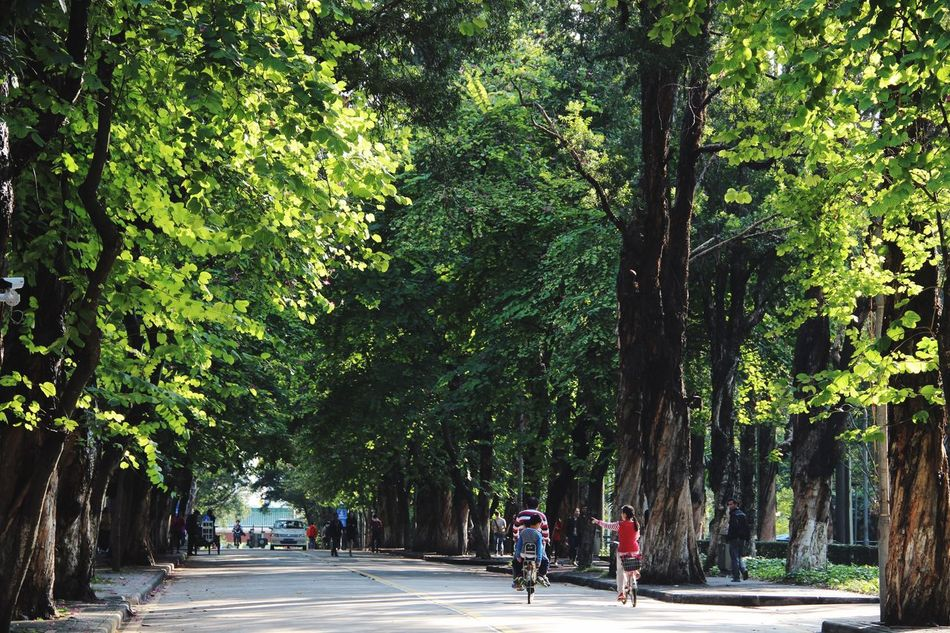 Landscape School Sunshine Afternoon Trees Nature Road Sun Yat-sen University