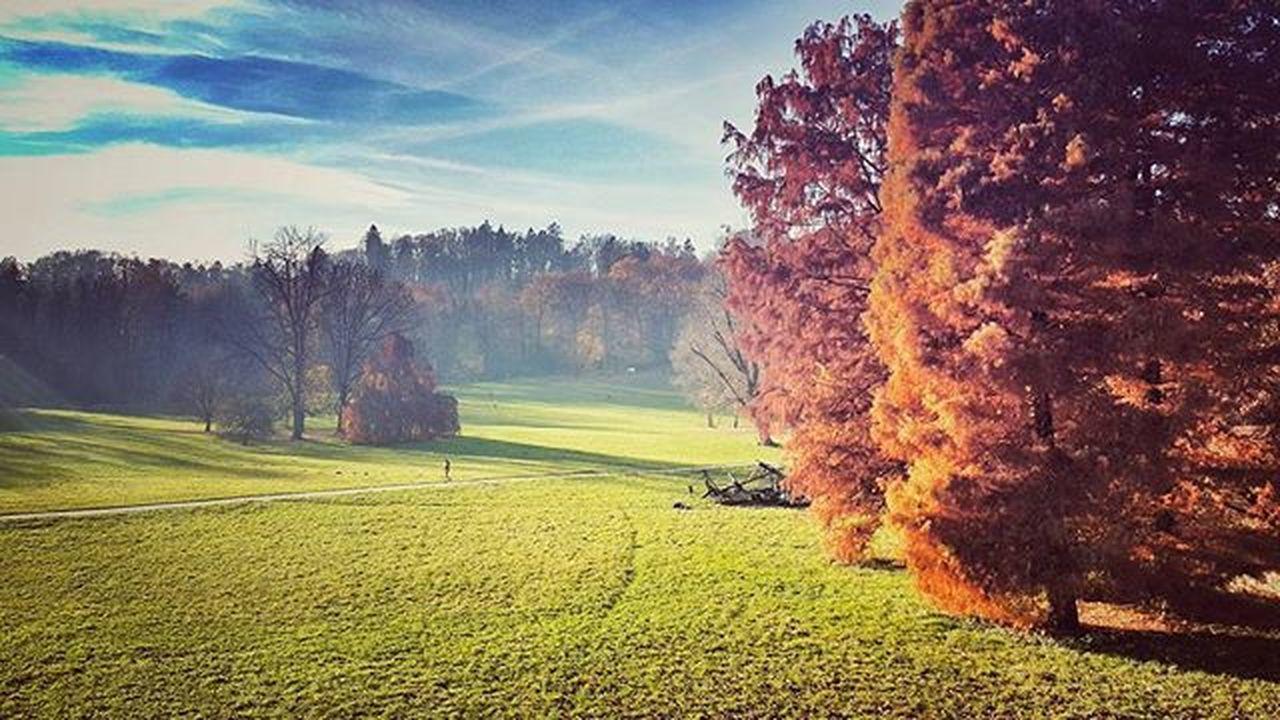 Tivoli Beautfulday Sunshine Nature Fall Autumn Colors Park Freedom Tree Ljubljana Slovenija Igslovenia