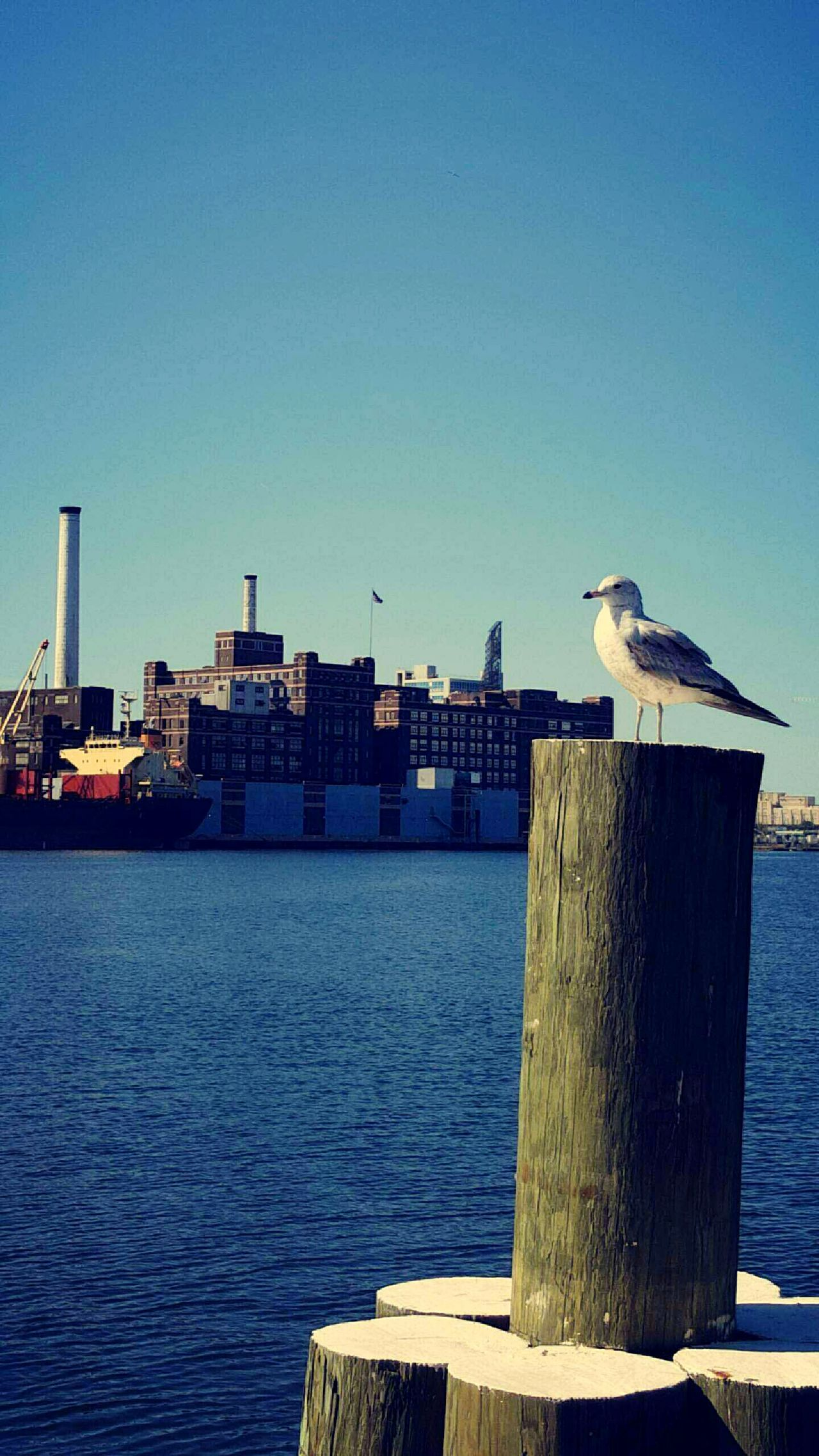 Baltimore Harbor First Eyeem Photo