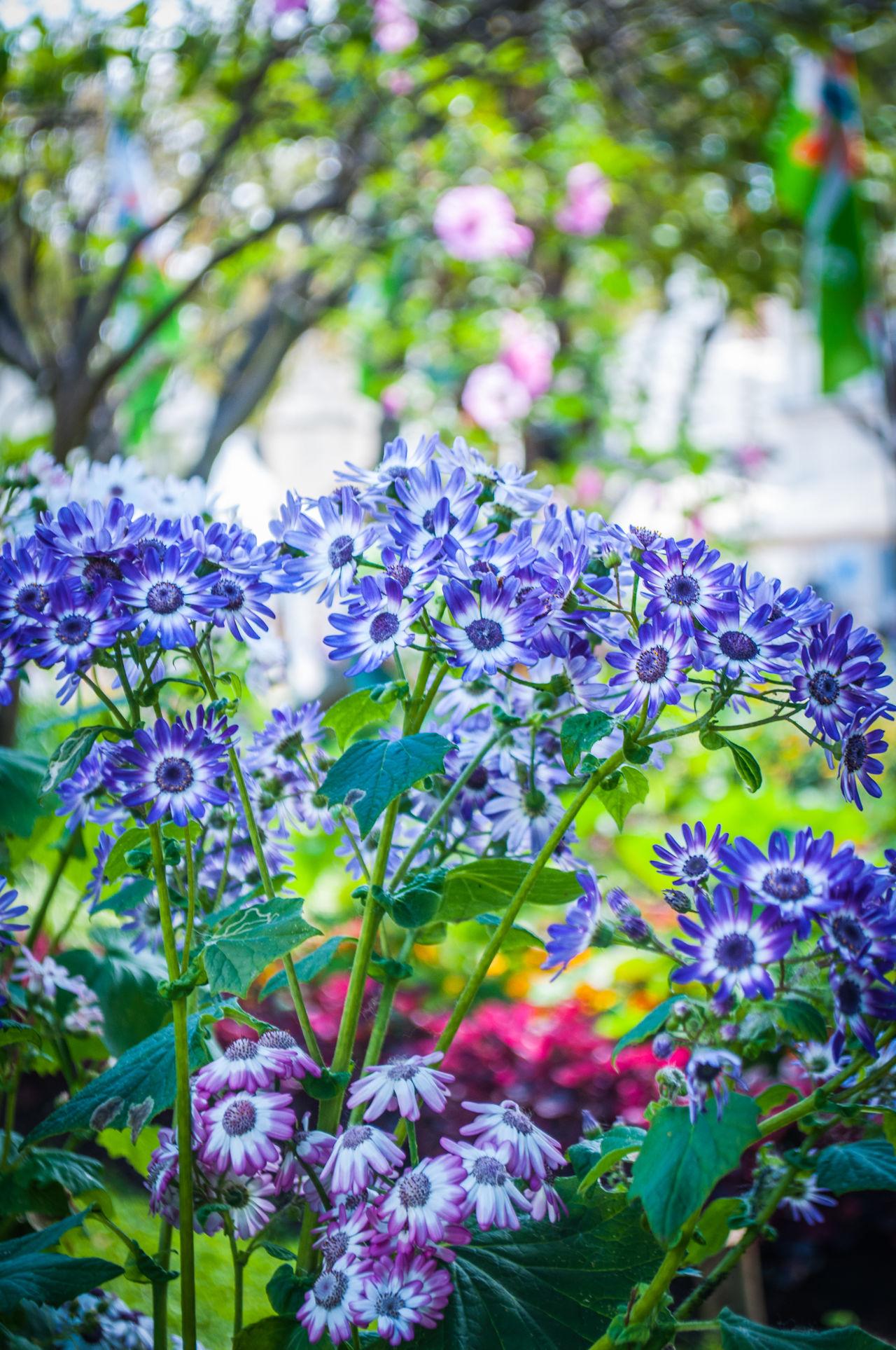 #flower#garden#nature#ecuador#santodomingoecuador#eyeEmfollowers#iphoneonly#nofiltrer#macro_garden#pretty#beautiful#followme#sho #igersportugal #morado #naturalbeauty #Nature  #portugal #pétalos #turismo