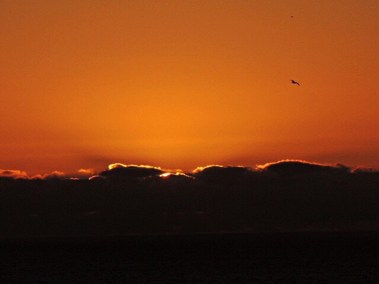 Sunset Today Sunset Sunset Silhouettes Sunset Fire  Sun Through The Clouds Sea And Sunset Orange Sky Dark Clouds Darkness And Light Bird In Flight Eye Em Nature Lover Sunset_captures Reñaca Beach , Chile