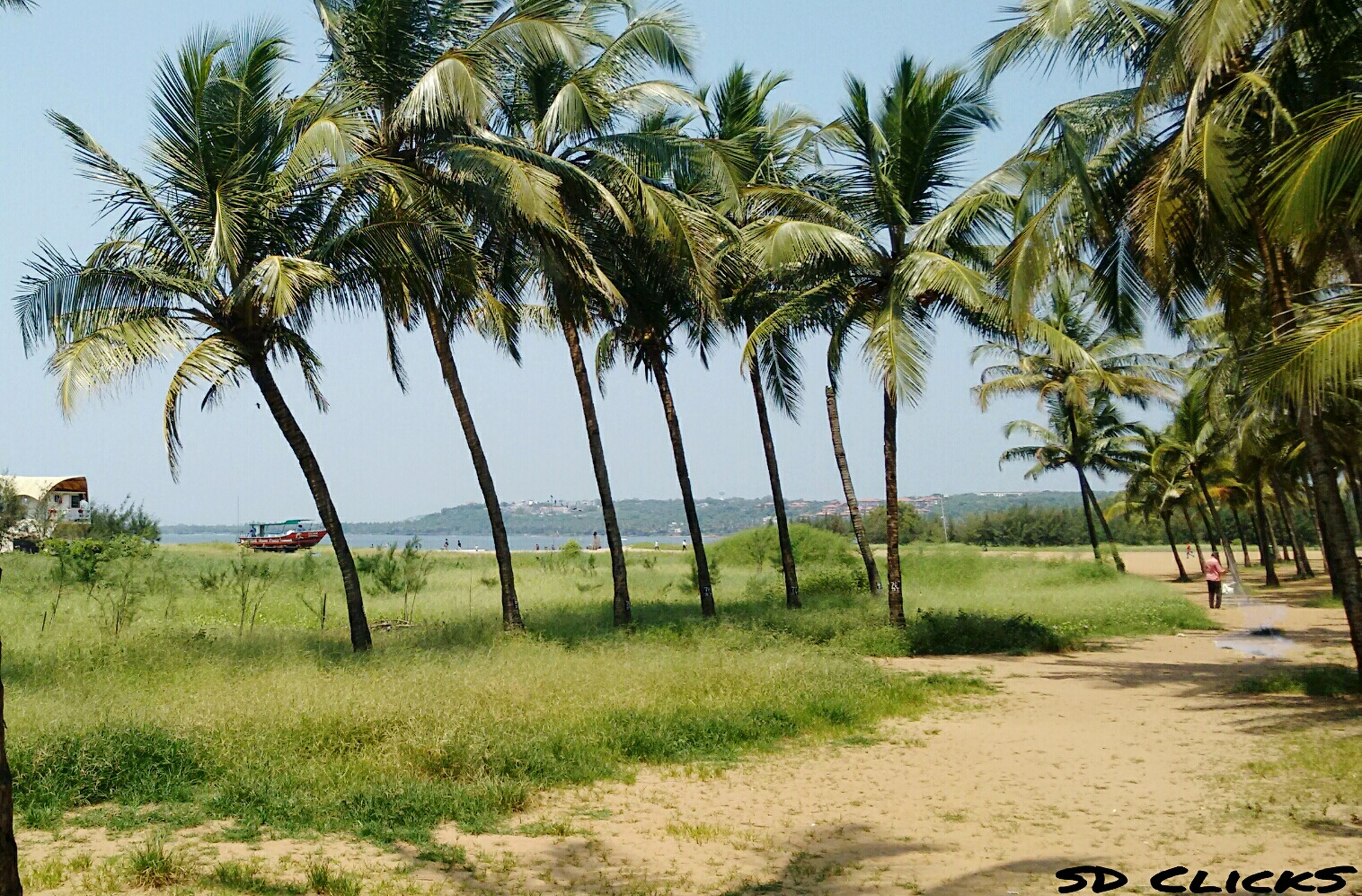 tree, palm tree, tranquility, growth, grass, tranquil scene, green color, tree trunk, nature, scenics, beauty in nature, sky, shadow, beach, landscape, sunlight, branch, day, sea, footpath