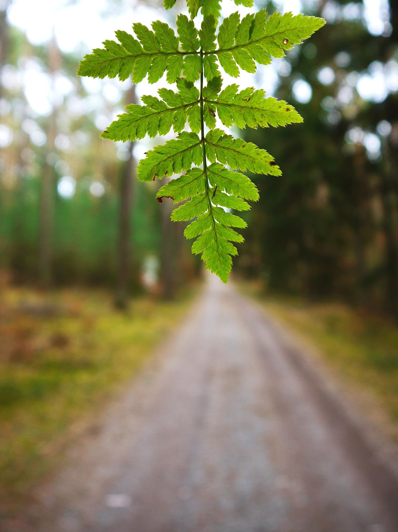 Greenery ... Tree Nature Green Color Close-up Growth The Way Forward Leaf Beauty In Nature No People Tranquility Day Outdoors Branch Freshness