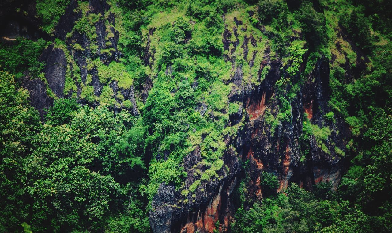 tree, forest, nature, no people, growth, lush foliage, green color, plant, lush, flora, day, outdoors, scenics, tranquil scene, tranquility, beauty in nature, water, landscape, waterfall