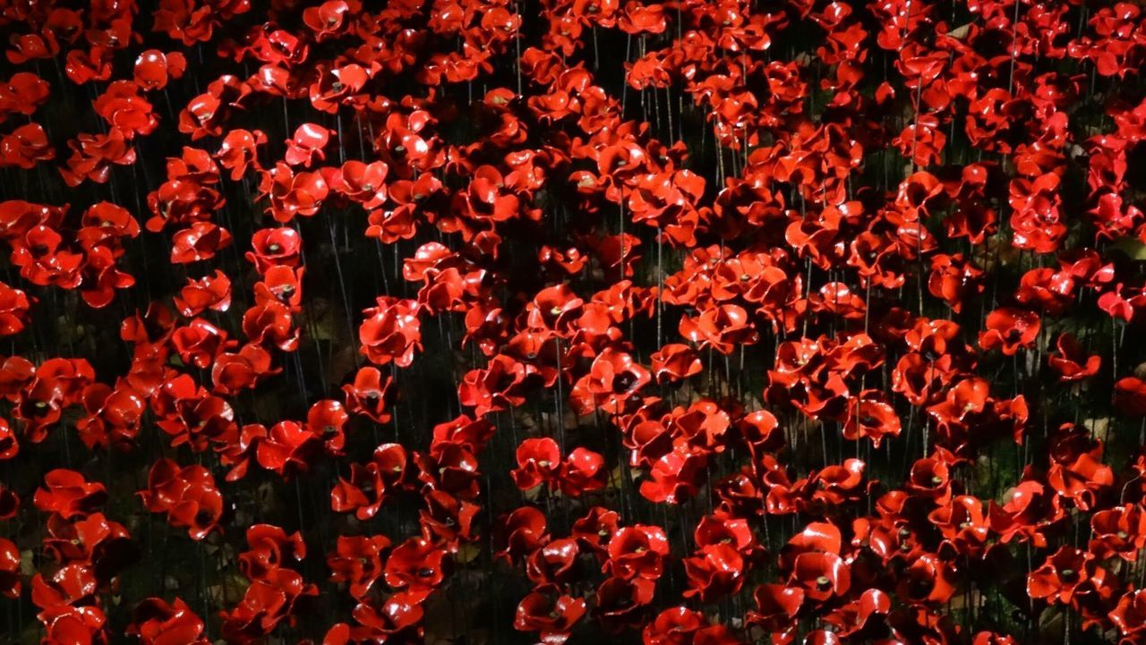 Poppies at the Tower of London, 2015. Poppies At The Tower Of London Poppies  Tower Of London London