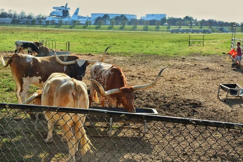 EyeEm Diversity Diversity Agriculture Farm Field Animals NASA Plane SpaceShip Tram Bulls Big Horn Big Horn Bulls Houston Texas