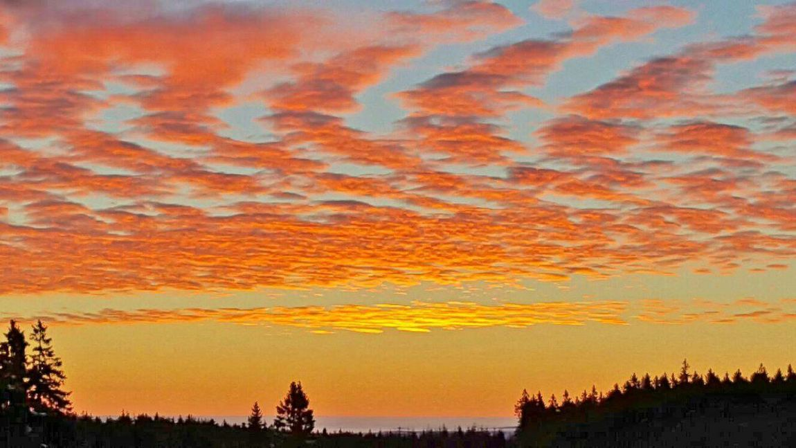 Sunset Orange Color Nature Dramatic Sky Beauty In Nature Sky Landscape Beauty In Nature Harz Bilder Braunlage Winter Harzmountains Wintertime GERMANY🇩🇪DEUTSCHERLAND@ Sunlight Germany🇩🇪 Harz Im Winter Cold Temperature Snowing Frozen