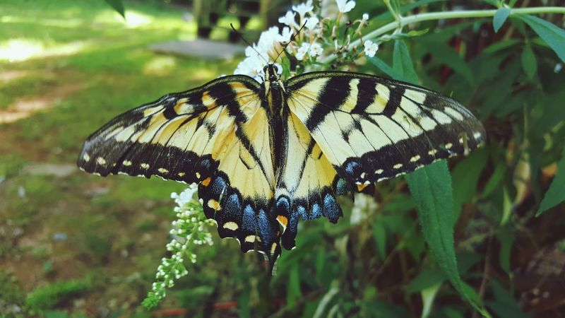 Butterfly Nature Nature Photography