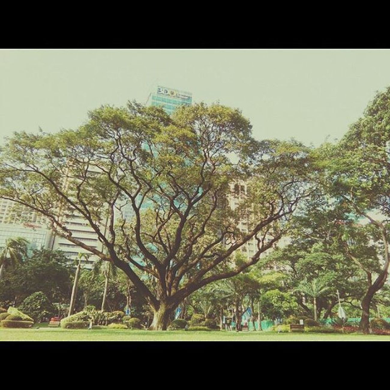 Ayala Triangle 🔺🔻 TreesInTheCity